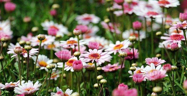 Agroker kertészeti gép webshop