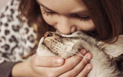Mivel kedveskedjek macskabolond barátnőmnek?